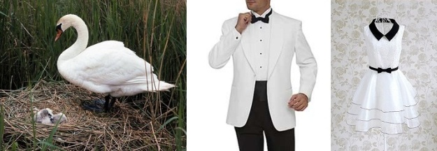 Swan Costume Inspiration
